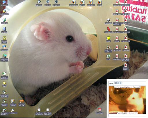 My desktop, starring Lucy