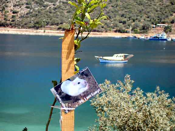 Lucy promotion in Kas - Turkey
