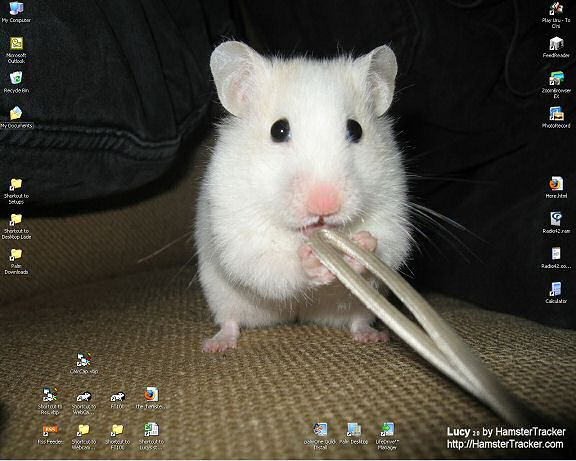 My new desktop, starring Lucy