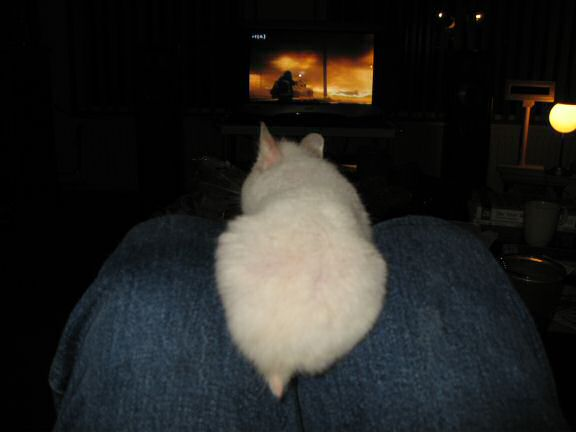 My hamster Lucy watchin' television with me.