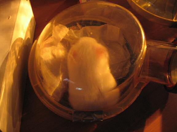 My hamster Lucy in her sleeping quarters.