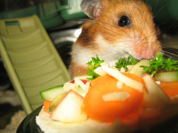 My hamster Lucy enjoying her micro Veggie Pizza.