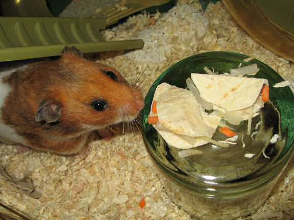 Servin' a Veggie Taco for my hamster Lucy.