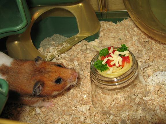My hamster Lucy enjoying her Simple Pasta dish.