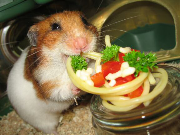 Simple Pasta for my Hamster Lucy.