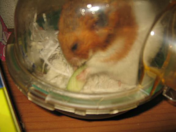 My Poor, Poor, hamster Lucy - part III.