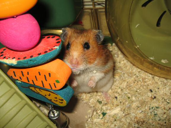 Kims favorite pick of photograph of my hamster Lucy.