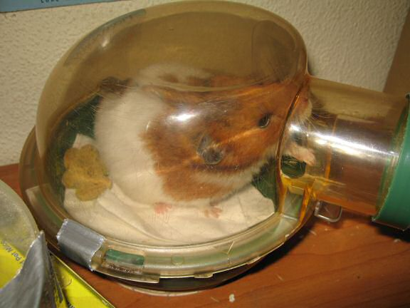 My Hamster Lucy Getting Her Bedroom Cleaned