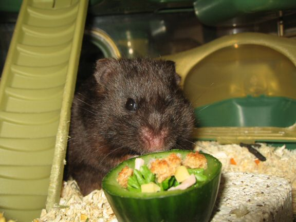 Serving My Hamster Lucy The Ceasar Salad Dish I Made For Her