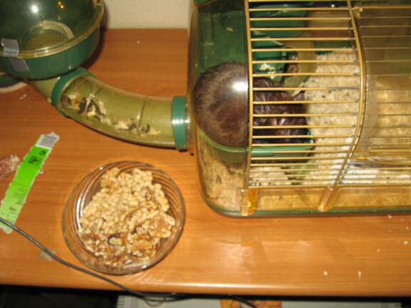 My hamster Lucy's Pine-Seed Treat Feed ...