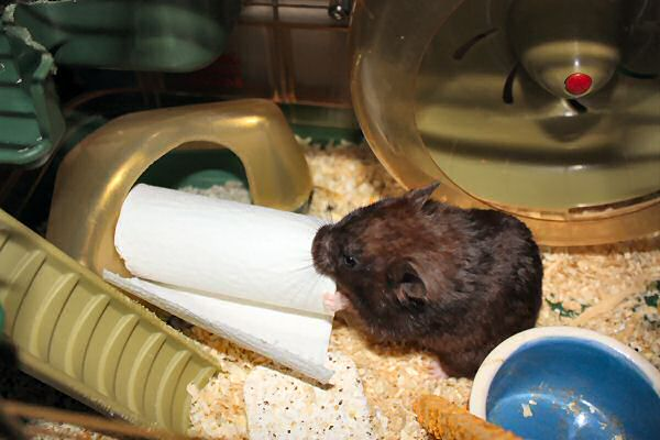 My hamster Lucy's TP-ROLL devour (again).