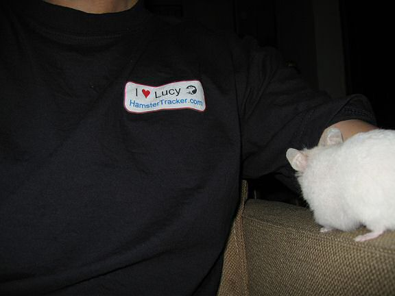 My hamster Lucy inspecting the new HamsterTracker.com shirt.