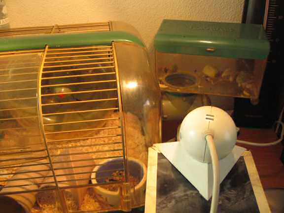 My hamster Lucy's Meditation Room change.
