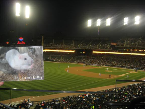 Lucy at a Detroit Tigers Game.