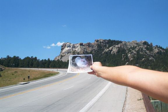 DIY Extreme HamsterTrackin' in front of Mount Rushmore!