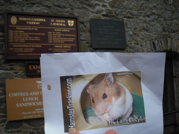 Extreme HamsterTrackin' Wales by Marion.