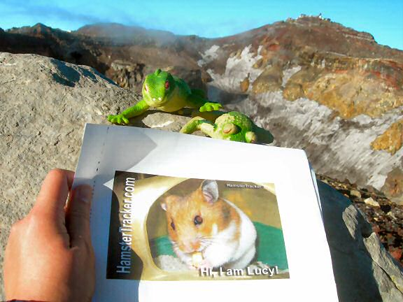 Extreme HamsterTrackin' from Mt. Fuji, by Patricia.