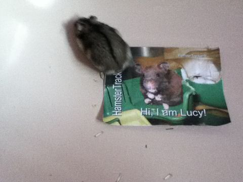 Extreme HamsterTracking South Africa by Toni and his hamster Lucy.