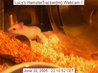 Webcam shot of my hamster Lucy